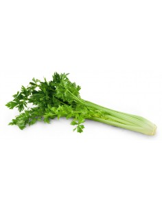 celeri-branche.jpg
