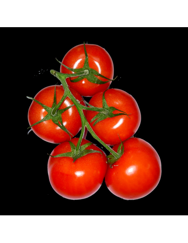 tomate grappe