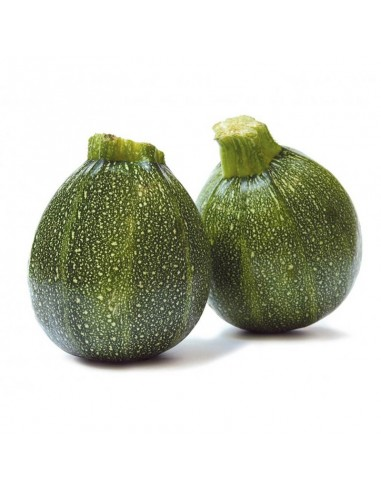 courgette-ronde.jpg